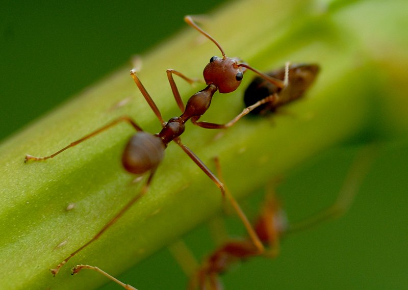 ant-closeup