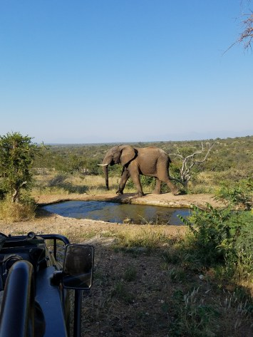 One of many safari pics